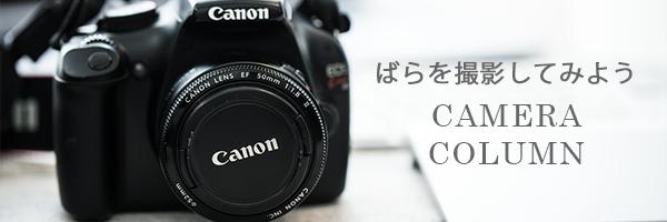 カメラコラム