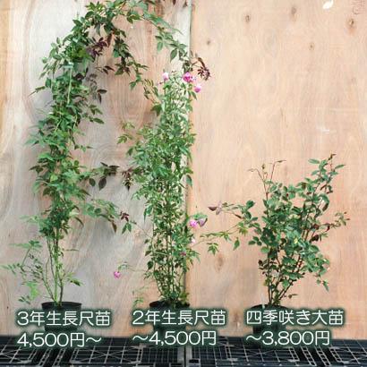苗の大きさと販売価格の例