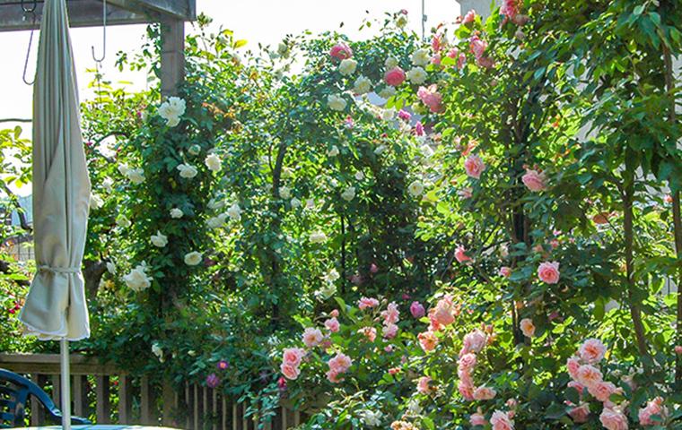 庭造り素材