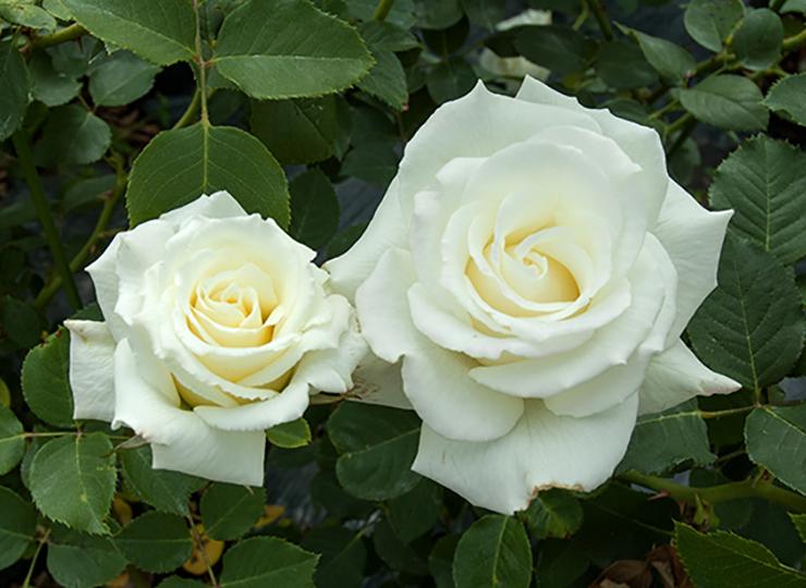 ホワイト ライトニン - White Lightnin'