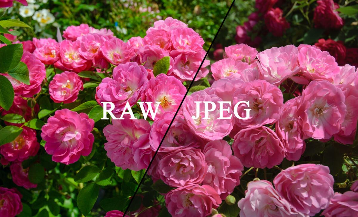 RAWデータを保存してみよう - カメラの画質設定「JPEG」と「RAW」の違い