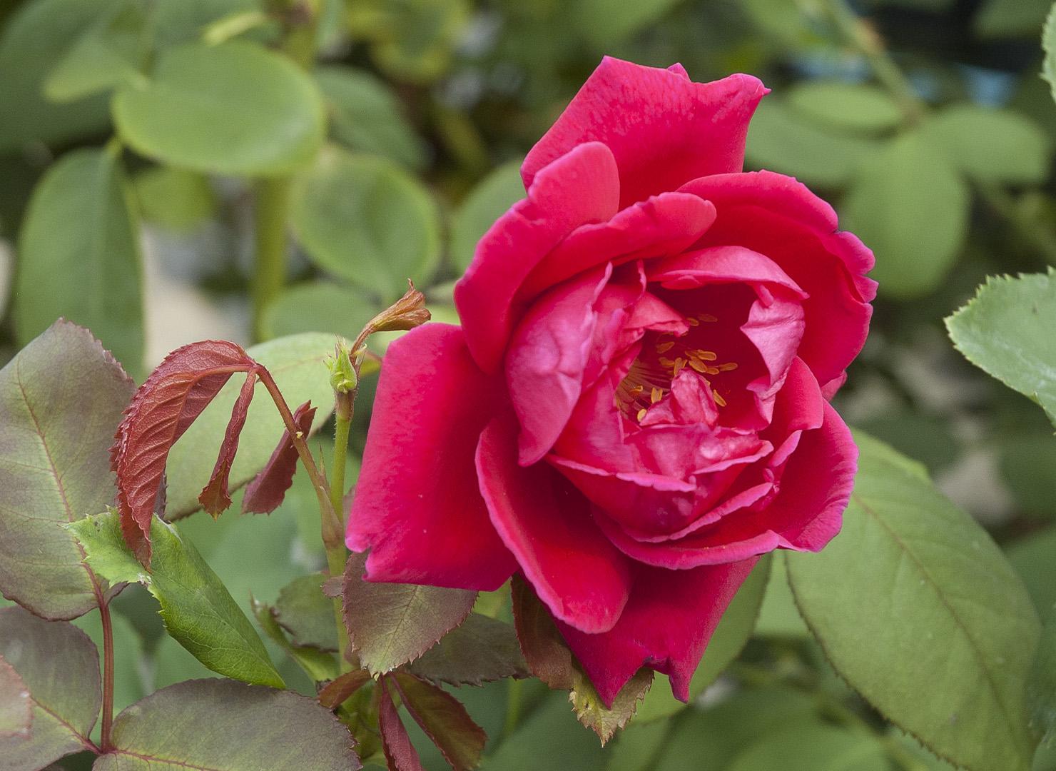 ナショナル フラワー ギルド - National Flower Guild