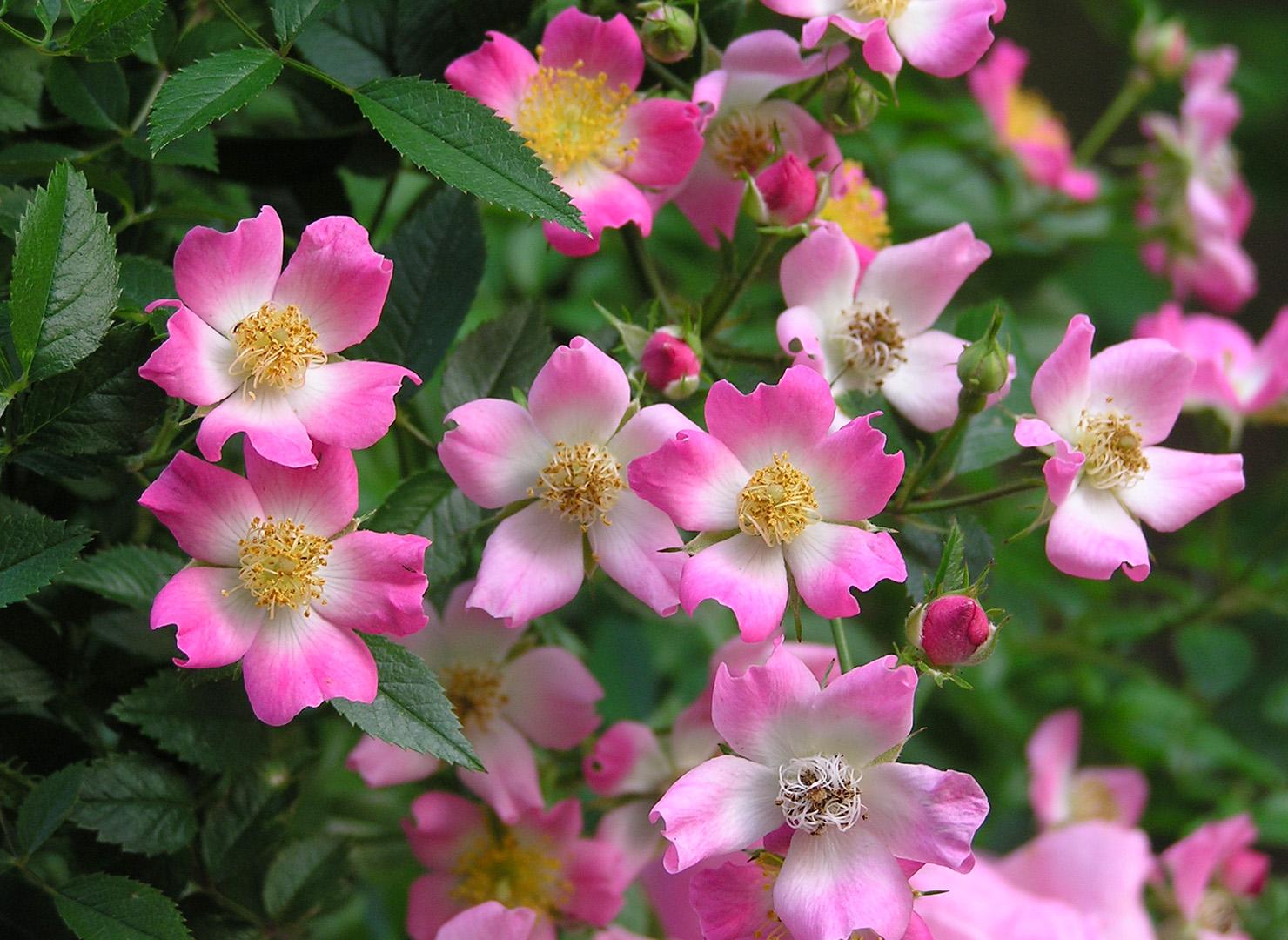 ピンク スプレー - Pink Spray