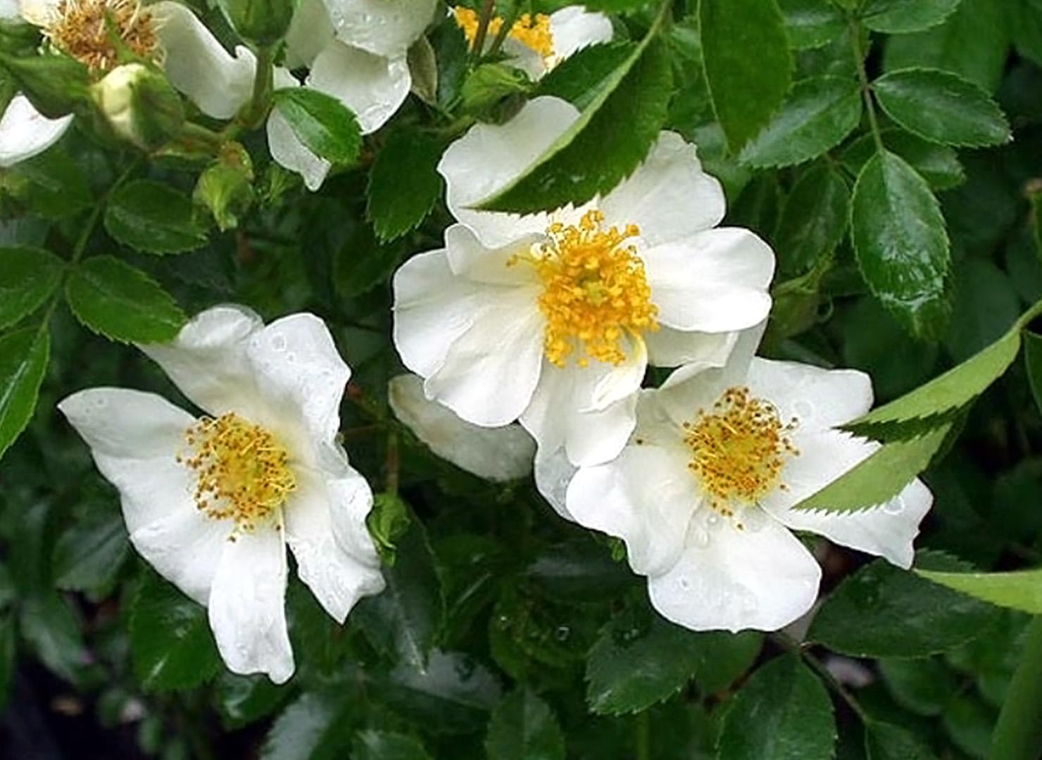 サニーサイド ホワイト - Sunny Side White